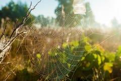 Сеть паука на заднем плане солнца Стоковые Изображения
