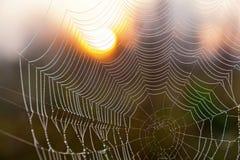 Сеть паука на заднем плане солнца Стоковое Фото