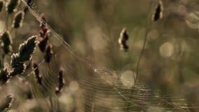 Сеть паука на заднем свете акции видеоматериалы
