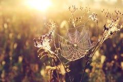 Сеть паука на запачканной золотой предпосылке с bokeh Стоковое фото RF