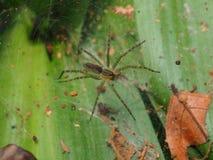 Сеть паука на лист Стоковая Фотография
