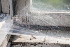 Сеть паука на пакостном окне Стоковое Изображение RF