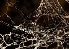 Сеть паука на потолке как предпосылка Стоковые Изображения