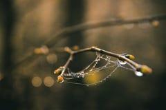 Сеть паука на почках с красочной предпосылкой Стоковая Фотография