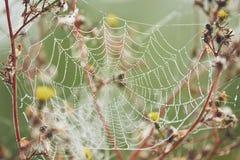 Сеть паука на цветке покрытом с росой Стоковое Изображение RF