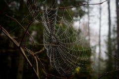 Сеть паука, но отсутствие паук стоковое изображение rf