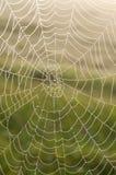 Сеть паука (паутина) с падениями росы Стоковые Фотографии RF