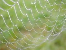 сеть паука падений росы стоковые изображения rf