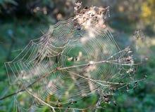 сеть паука падений росы Стоковые Фотографии RF