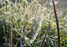 сеть паука падений росы Стоковые Фото