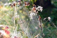 сеть паука падений росы Стоковое фото RF