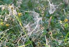 сеть паука падений росы Стоковое Изображение