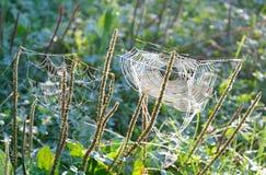 сеть паука падений росы Стоковая Фотография RF