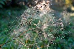 сеть паука падений росы Стоковое Изображение RF