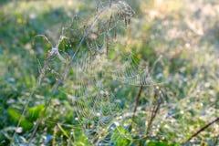сеть паука падений росы Стоковые Изображения