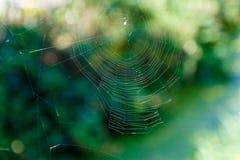 Сеть паука против зеленой предпосылки Стоковая Фотография RF