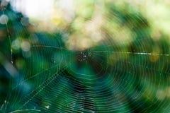 Сеть паука против зеленой предпосылки Стоковые Фотографии RF