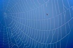 сеть паука сини предпосылки Стоковая Фотография RF