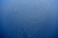 сеть паука сини предпосылки Стоковое Фото