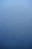 сеть паука сини предпосылки Стоковое Изображение