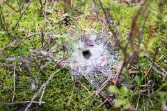Сеть паука с входом Стоковое Изображение RF
