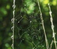 Сеть паука с зеленой запачканной предпосылкой стоковые фотографии rf