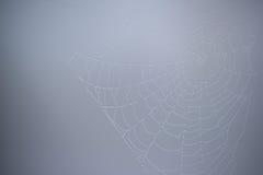Сеть паука с капельками воды Стоковые Фото