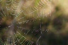 Сеть паука с красочной предпосылкой, серией природы Стоковое Фото
