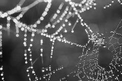 Сеть паука с макросом падений росы Стоковые Изображения