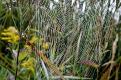 Сеть паука с падениями росы утра Стоковое фото RF
