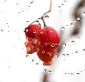 Сеть паука с падениями росы абстрактная предпосылка Стоковое Фото