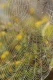 Сеть паука с утром орошает в утре стоковое фото
