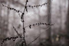 сеть паука утра росы Стоковое Фото