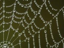 сеть паука утра росы Стоковые Изображения