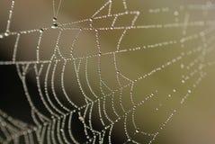 сеть паука утра s Стоковые Фото