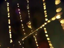 Сеть паука Стоковое Фото
