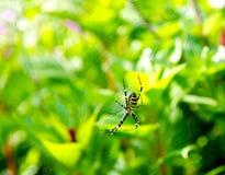 сеть паука Стоковые Фото