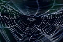 Сеть паука Стоковые Фотографии RF