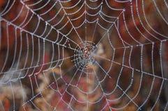 Сеть паука. Стоковое Изображение RF