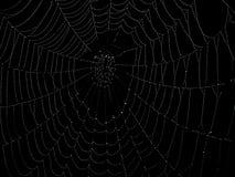 сеть паука Стоковое Изображение