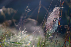 Сеть радуги Стоковая Фотография