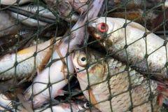 сеть рыб Стоковые Фото
