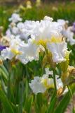 сеть универсалии шаблона страницы радужки приветствию цветка карточки предпосылки Стоковая Фотография