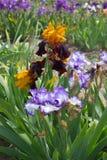 сеть универсалии шаблона страницы радужки приветствию цветка карточки предпосылки Стоковое Фото