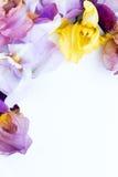 сеть универсалии шаблона страницы радужки приветствию цветка карточки предпосылки Стоковые Изображения RF