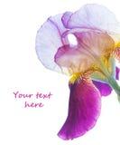 сеть универсалии шаблона страницы радужки приветствию цветка карточки предпосылки Стоковые Фотографии RF