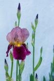 сеть универсалии шаблона страницы радужки приветствию цветка карточки предпосылки стоковое фото rf