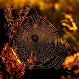 сеть утра Стоковые Изображения RF