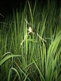 Сеть человек-паука стоковое фото rf