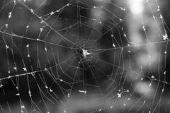 сеть Стоковое Фото